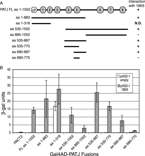 PATJ, a tight junction-associated PDZ protein, is a novel degradation target of high-risk human papillomavirus E6 and the alternatively spliced isoform 18 E6.