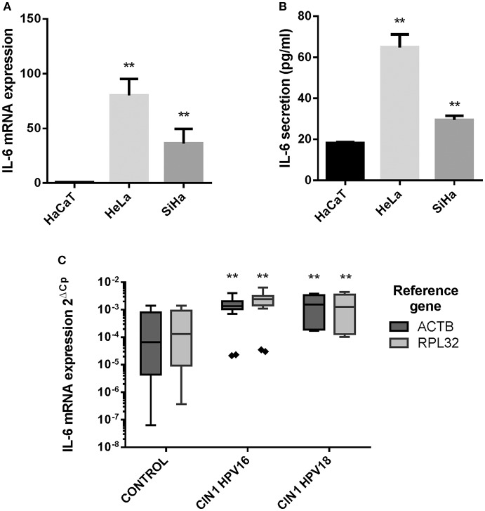 Differential phosphorylation determines the repressor and activator potencies of GLI1 proteins and their efficiency in modulating the HPV life cycle